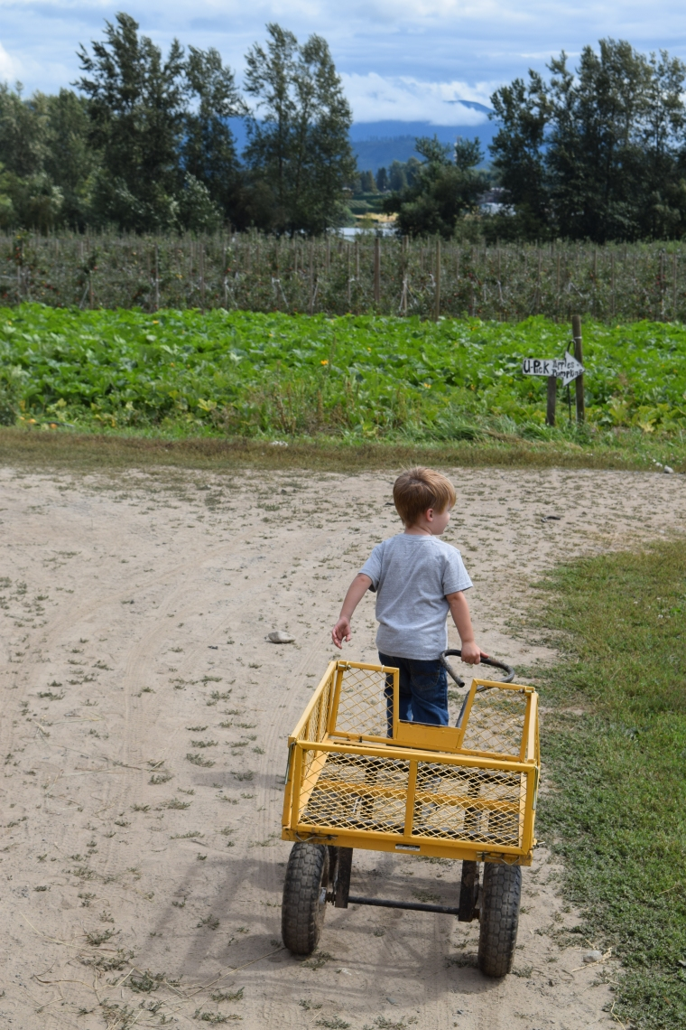 My strong boy, pulling the wagon out to the U-Pick field