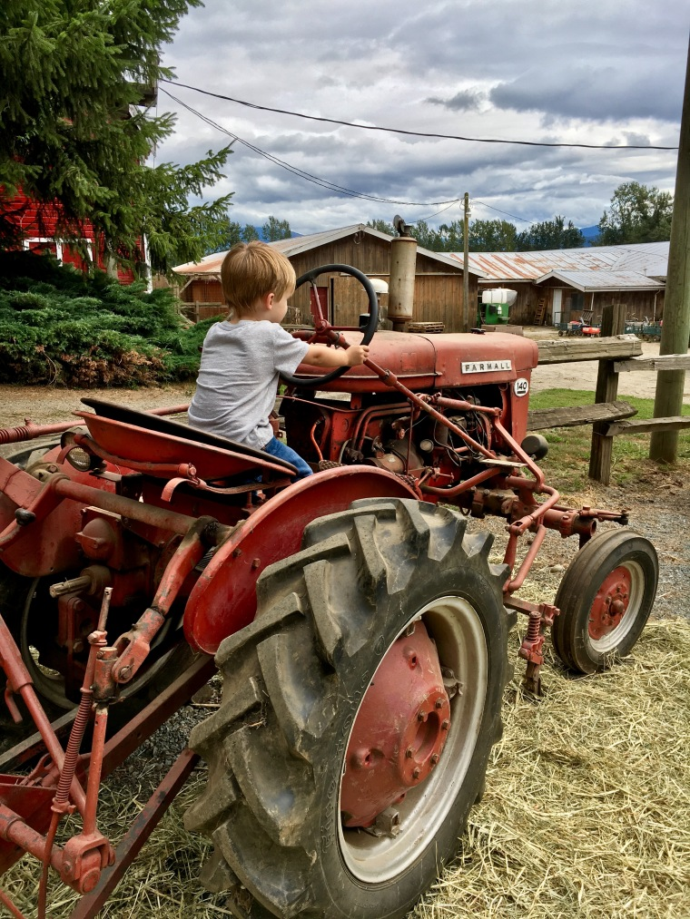 Riding the tractor.. his favourite!